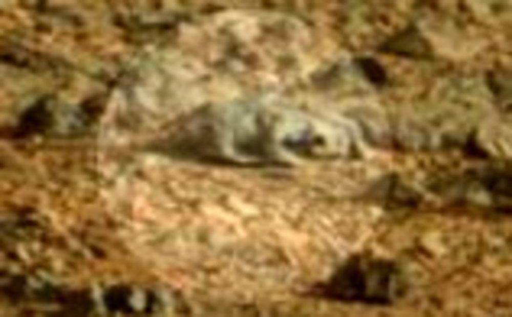 фото живого существа на марсе