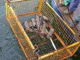 """earthmagazine.org nuotr./Baltijsko (liet. Pilava, vok. Pillau) uosto akvatorijoje rastas """"laimikis"""" – šįkart """"tik"""" fugasiniai sviediniai."""