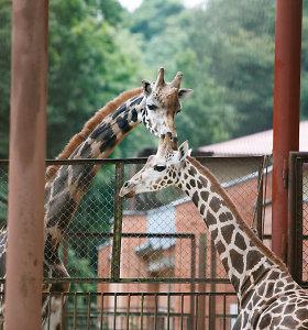 Bilietus į Zoologijos sodą galima įsigyti internetu