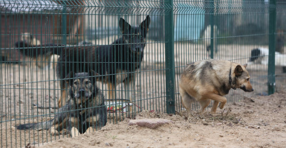 Gyvūnų prieglaudose situacija vis blogėja: kačių ir šunų padvigubėjo