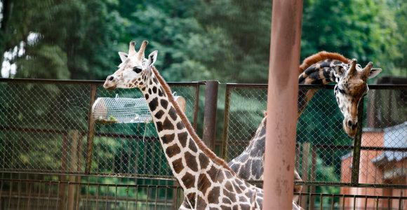 Naujovė, kuri supaprastins apsilankymą zoologijos sode