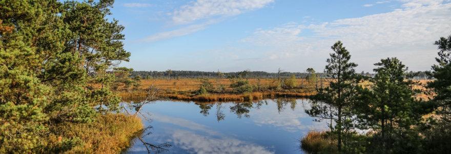 Žymiausia pasaulyje, bet nežinoma dažnam lietuviui – įspūdingo grožio Aukštumalos pelkė