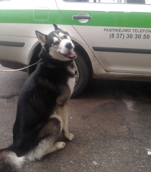 Jonavos rajone rastas šuo