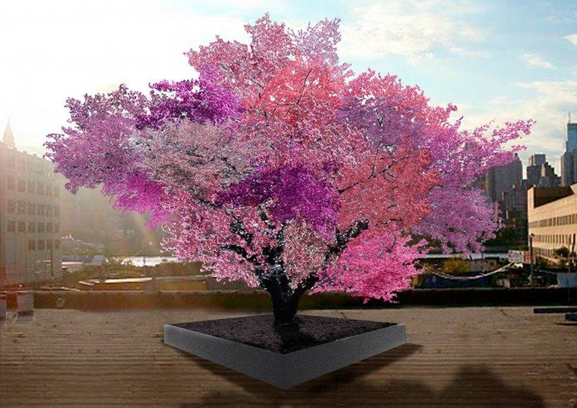 40 vaisių medis