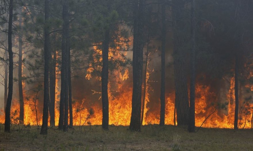 Miško gaisras Kolorado valstijoje