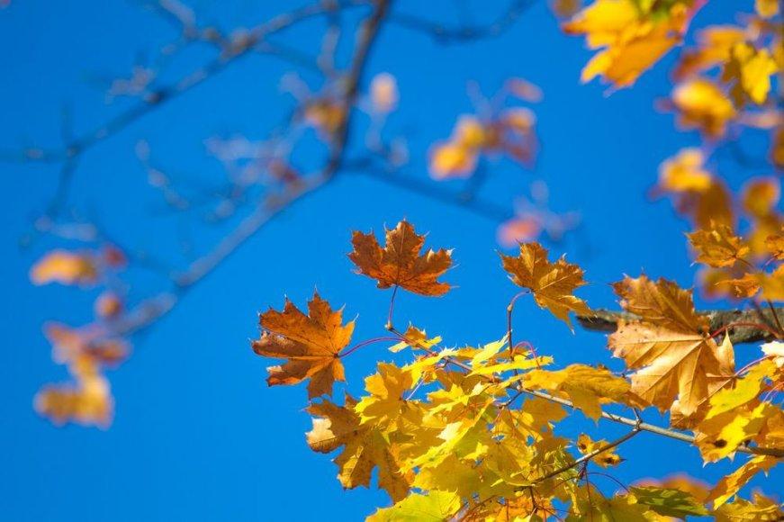Ryškiomis spalvomis ruduo pasiryžęs nukonkuruoti pavasarį.