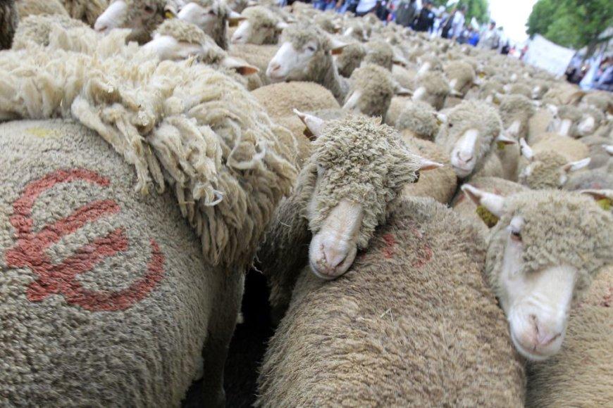 Ūkininkų protestas Paryžiuje