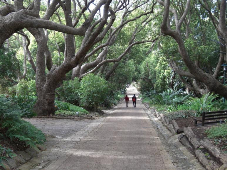 Kamparo alėja
