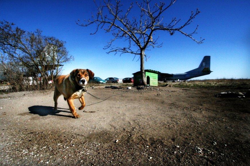 Šuo Čikis