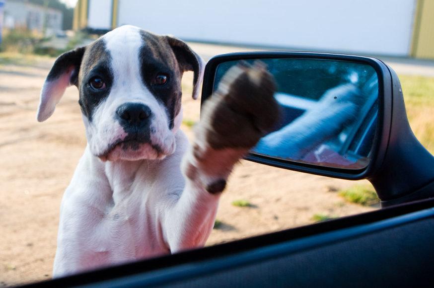 Dideli šunį nuo šiol vežtis galima tik nuosavu automobiliu