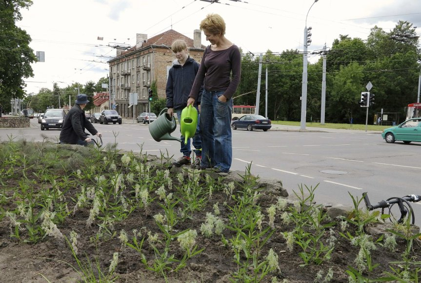 Naujas gėlynas Vilniuje
