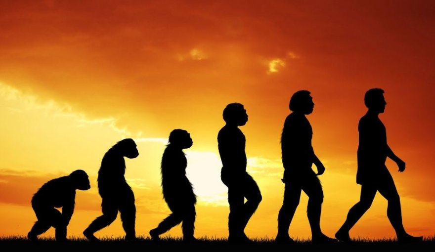 Žmogaus evoliucija