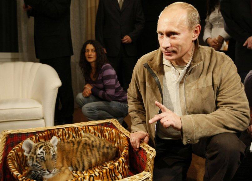 Vladimiras Putinas pozuoja prie tigro jauniklio