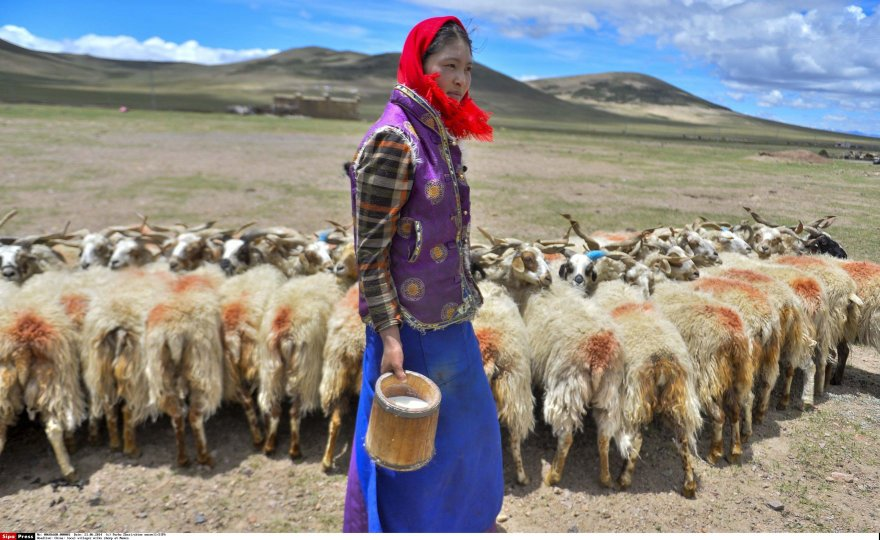 Tibetietė