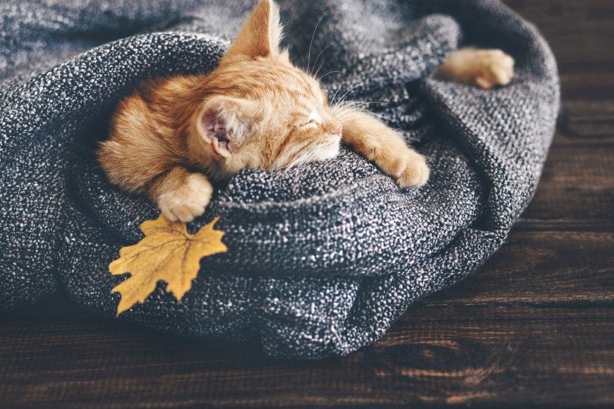 Katė miega.