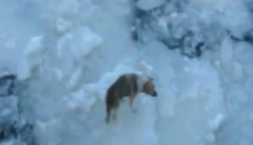 Šuo Baltijos jūroje