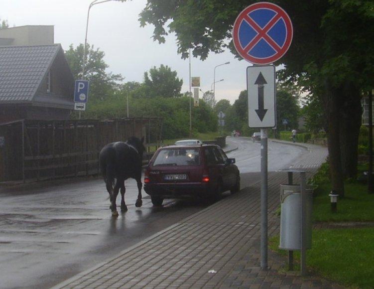Arklys ir mersedesas Trakuose
