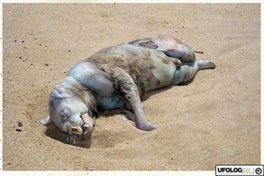 Keistas gyvis Niujorko paplūdimyje