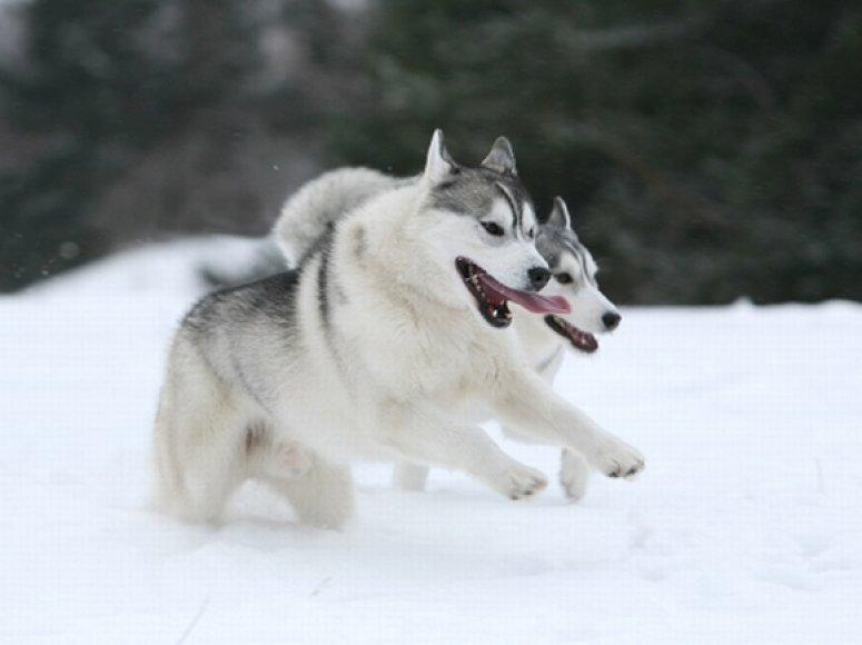 Šunys žiemą