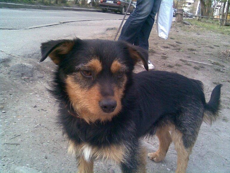 Šuniukas iš Kauno