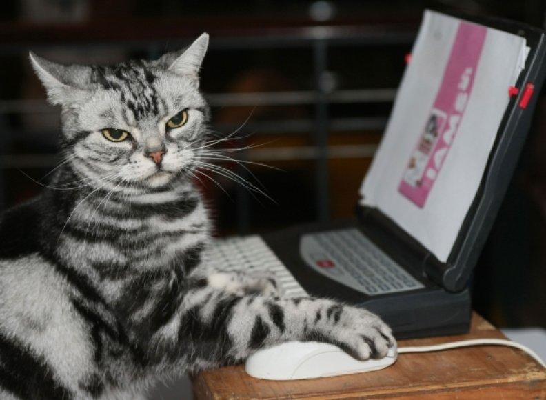 Katė ir kompiuteris