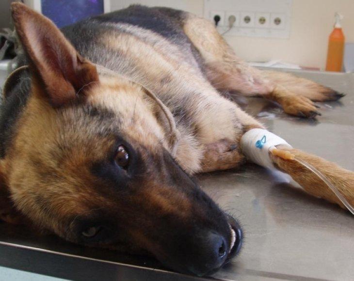 Kalytė Lesė veterinarijos gydykloje