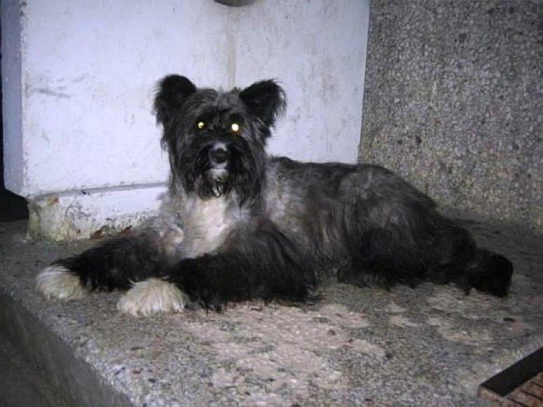 Priklydęs šunelis