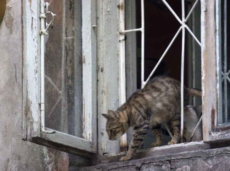 Katė ant palangės