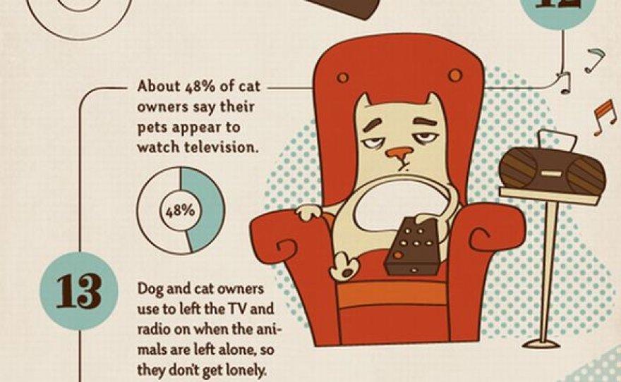48 proc. kačių savininkų amerikiečių tikina, kad jų augintinės žiūri televizorių.