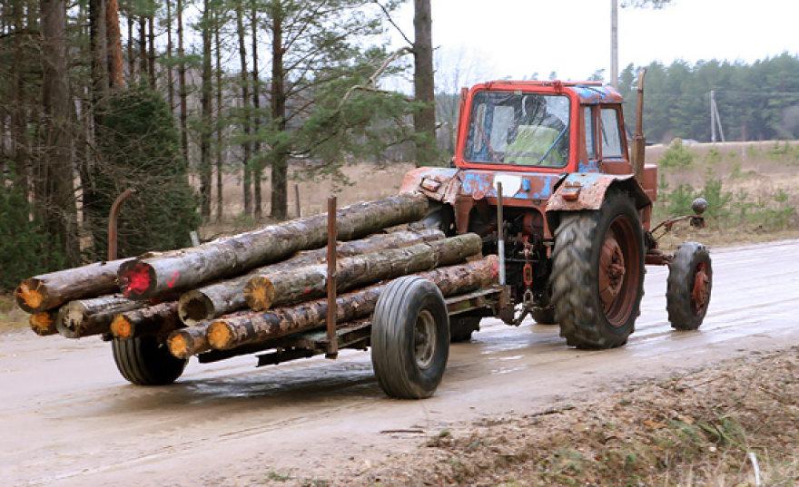 Traktorius gabena nukirstus medžius