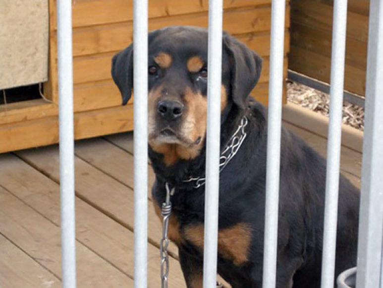 Ignalinos policininkai šiuo šunimi rūpinosi daugiau kaip parą