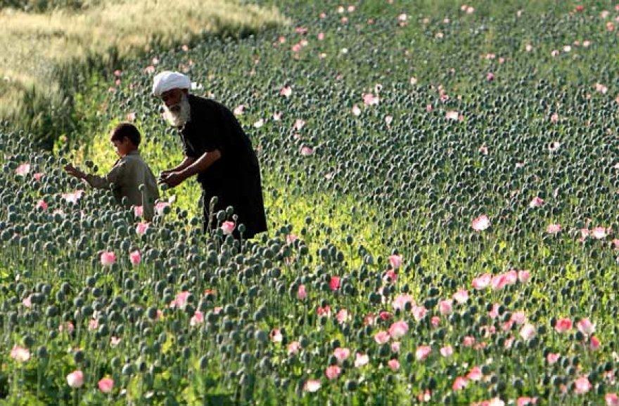 Afganistano valstietis su berniuku aguonų lauke