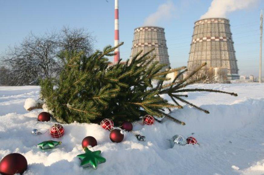 """Surinktos kalėdinės eglutės keliaus į """"Vilniaus energiją"""", iš kur skleis šilumą centralizuotai šildomiems vilniečių namams."""