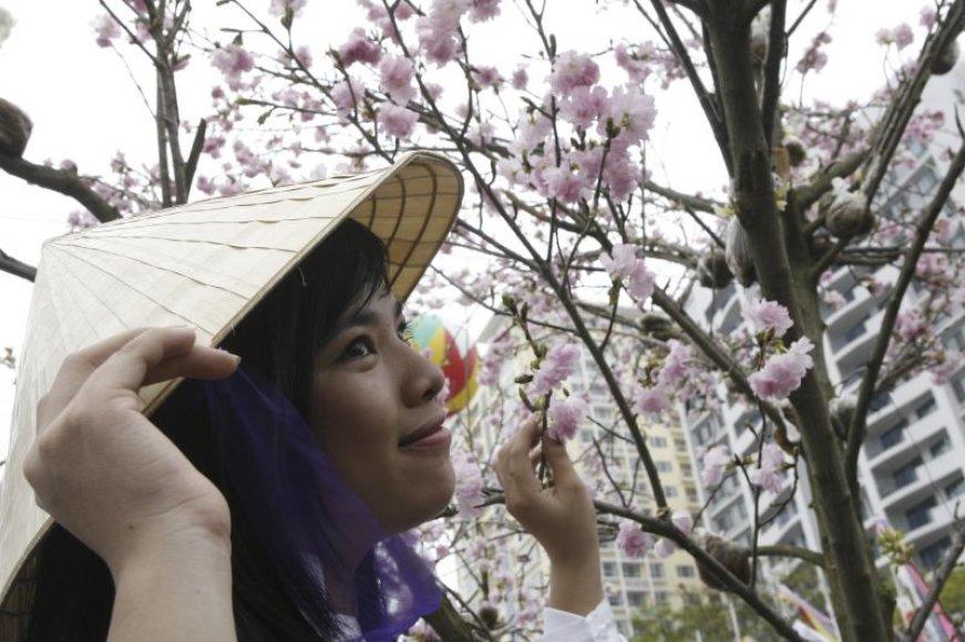 Moteris grožisi žydinčia sakura.