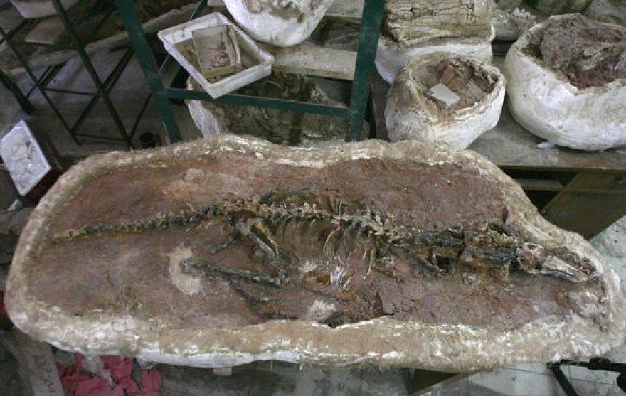 """Kinijos mokslininkų rastas """"Haplocheirus sollers"""" skeletas"""