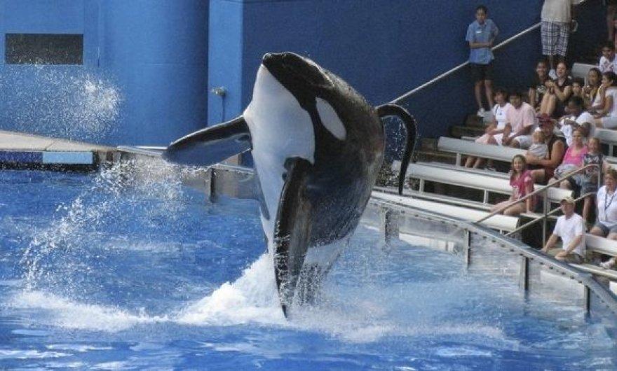 Banginis žudikas