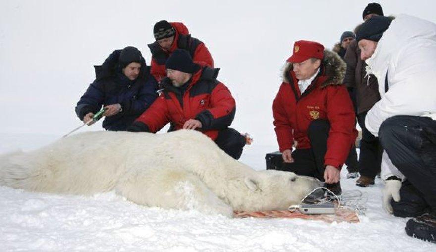 V.Putinas Arktyje baltajam lokiui užsegė antkaklį su palydoviniu siųstuvu.