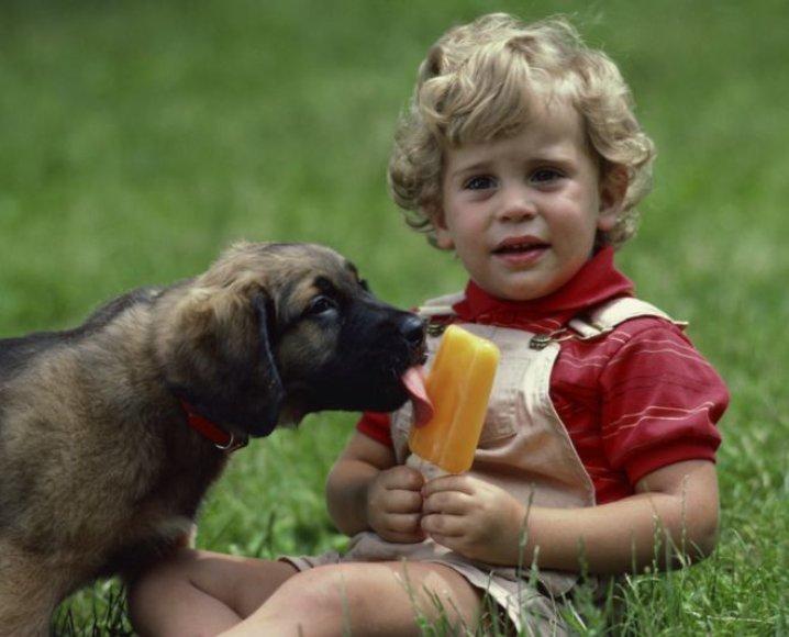 Šuns ir vaiko draugystė