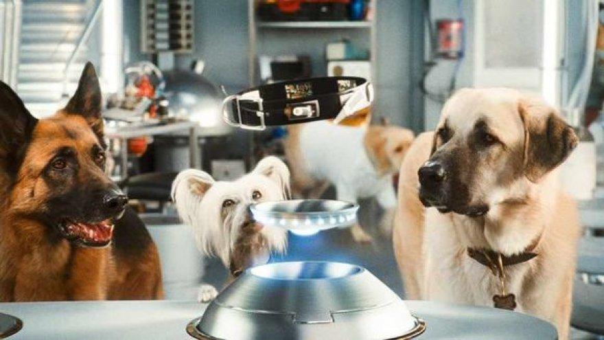 """Filmas """"Katės ir šunys: kačių kerštas"""""""