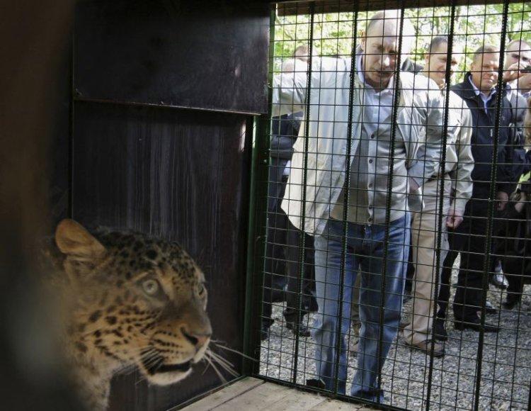Rusijos premjeras Putinas asmeniškai pasitiko Irano padovanotą leopardą.