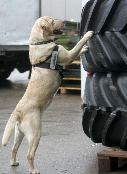 Tarnybinis šuo kontrabandines cigaretes aptiko kukurūzų dėžutėse.
