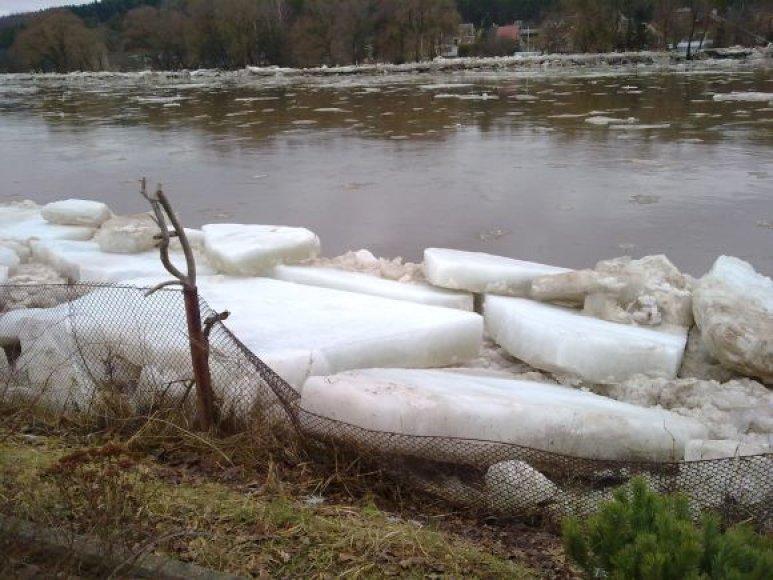 Kiekvienais metais Neries ledai išlipa į krantą