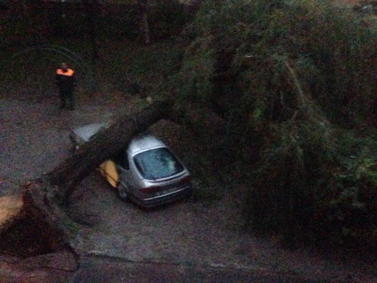 Sostinės Gerosios Vilties gatvėje ant automobilio užvirto medis