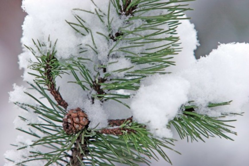Naktį sulauksime šaltuko, rytoj dieną džiaugsimės sniegu.