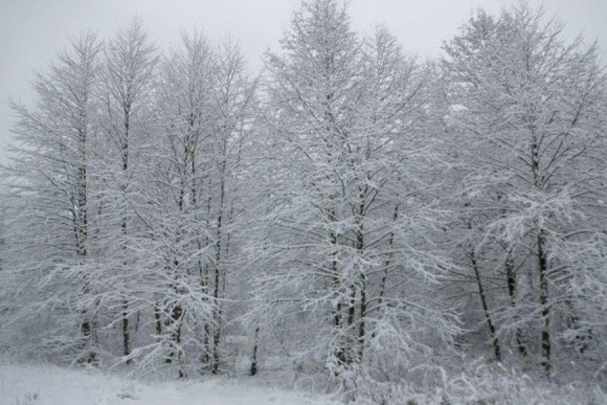 Žiemos akimirkos