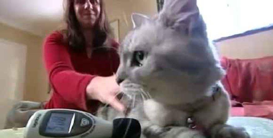 Katė Smokey