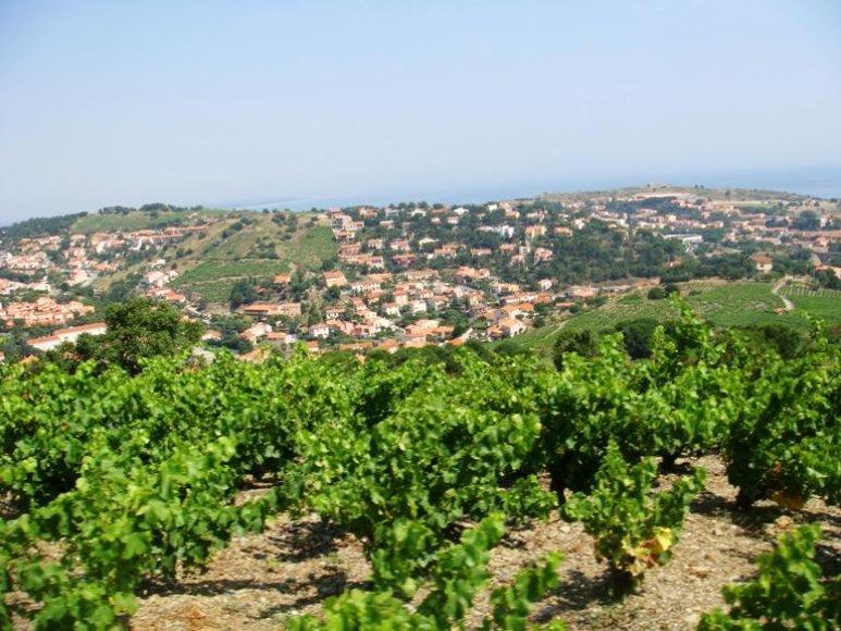 Prancūzijos vynuogynai