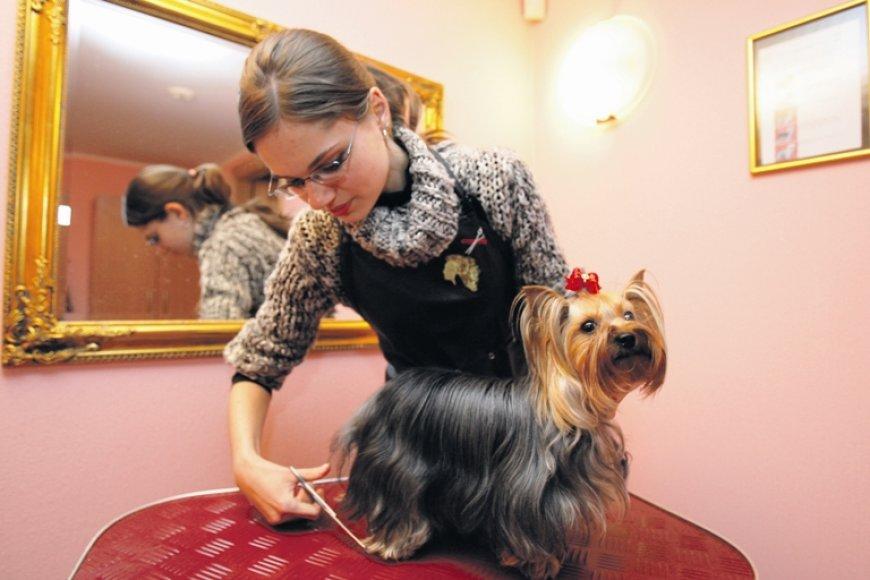 Šunų grožio salone