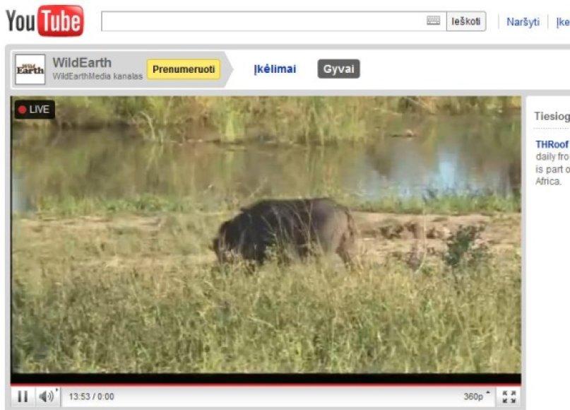 """""""YouTube"""" jau galima žiūrėti tiesiogines transliacijas, kad ir iš safario."""