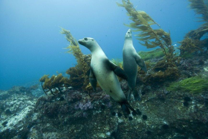 """Mokslo festivalis bus atidarytas ketvirtadienį, filmo """"Gyvasis vandenynas"""" peržiūra ir diskusija apie grėsmę mūsų planetos gyvūnijos ir augalijos įvairovei"""